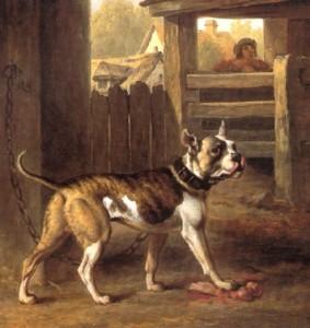 bulldog in 1790