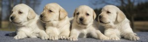Puppy care: housetraining methods