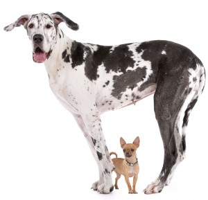 Puppy Search 4: Does size matter where dogs are concerned?
