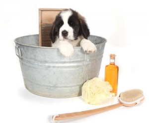 Find out how to give puppy a bath