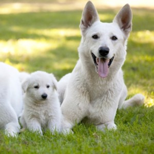 Puppy Search 7: should you buy a puppy or rescue a dog from a shelter