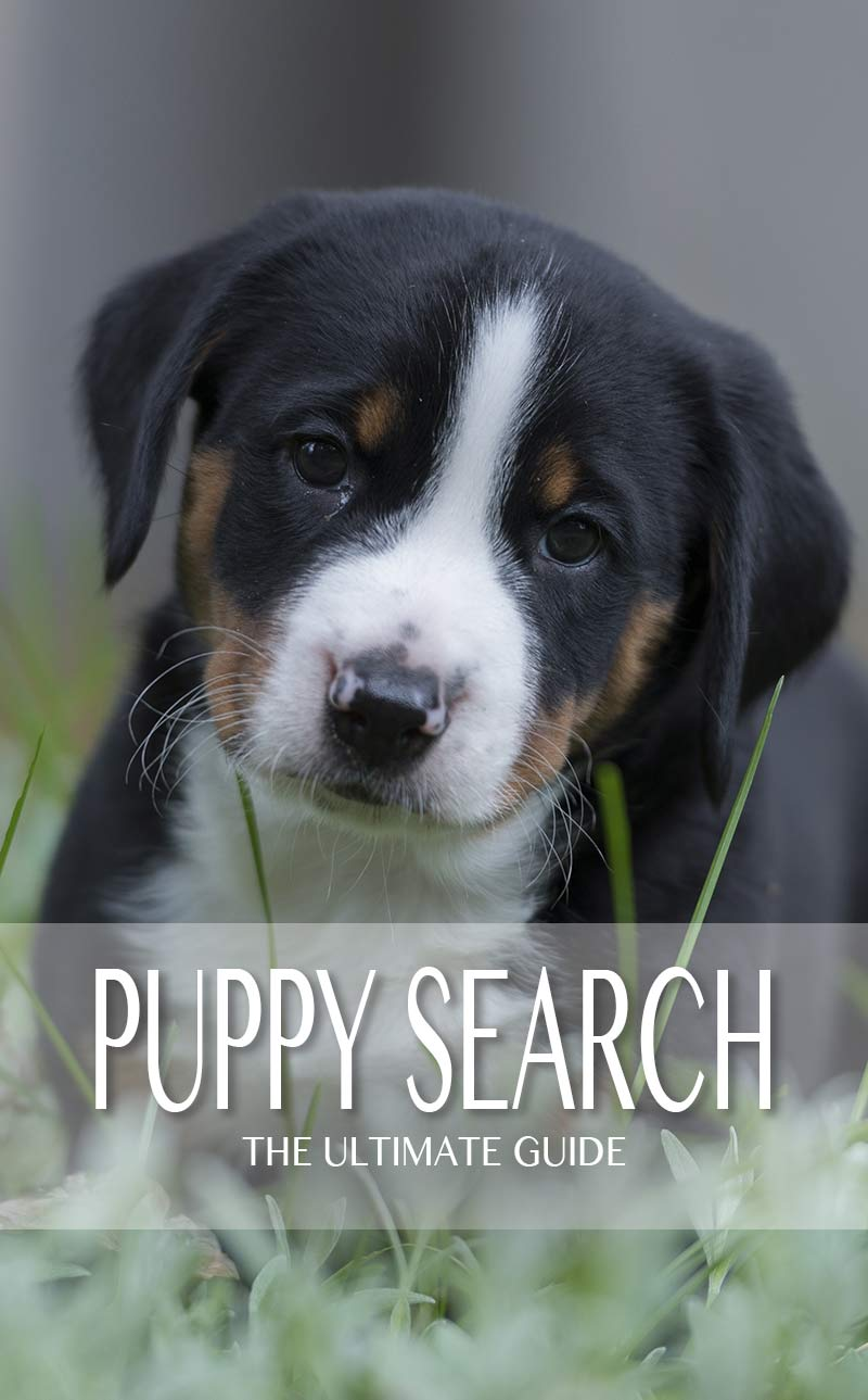 Puppy Search - How to find your perfect puppy