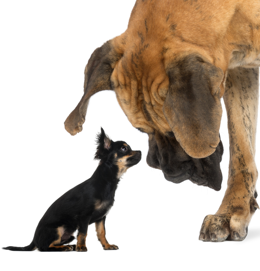the shape and size of your puppy