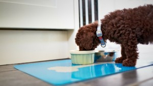 How To Feed Your Puppy On Kibble