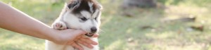 8 Ways To Reduce Your Puppy's Biting