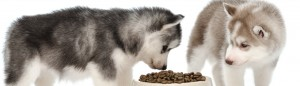 5 Simple Rules for Feeding your Puppy