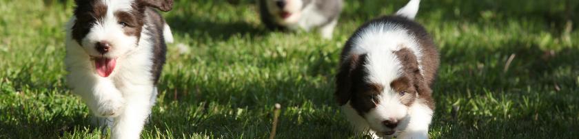 puppiesrunning840