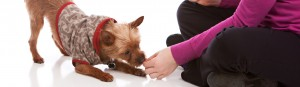 Why Modern Puppy Training Uses Food