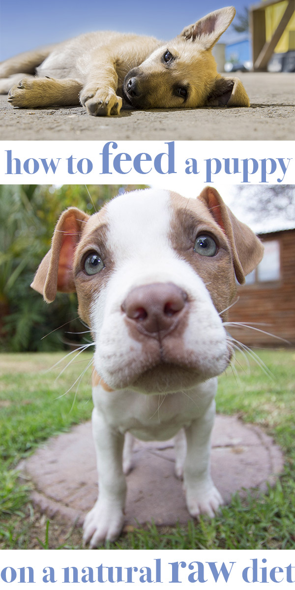 Raw Food For Puppies How To Feed Your Puppy On Natural Raw Food