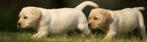 Puppy Search 14: should I choose a male or female puppy?