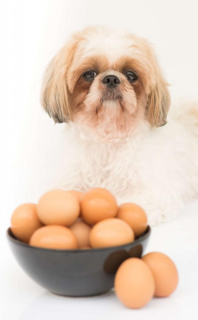raw eggs as dog food