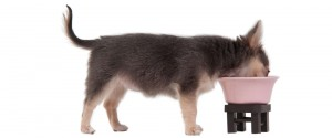 Feeding your puppy commercial dog food: the pros and cons of kibble