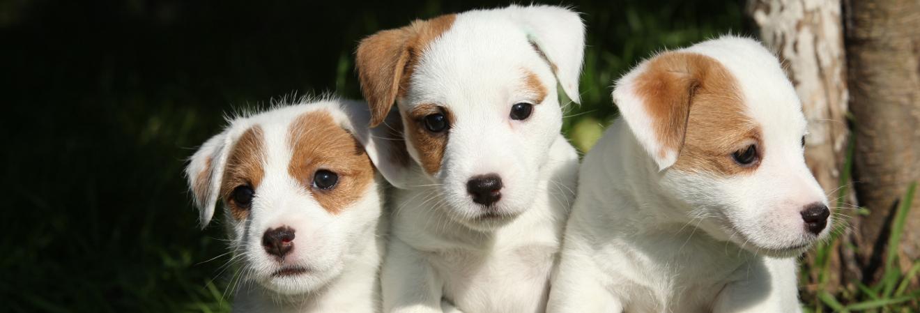 Your Puppy Visit Checklist