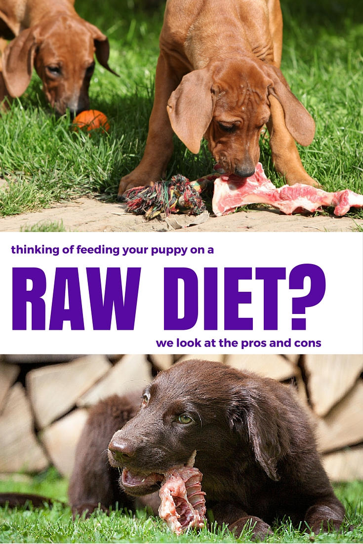 The pros and cons of raw feeding for dogs