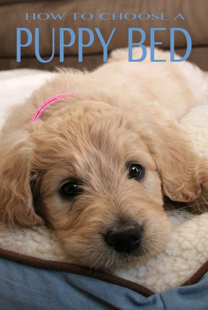 We help you figure out the best bed for your new puppy
