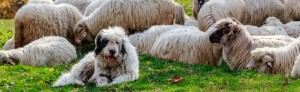 The Pastoral Group of Dogs