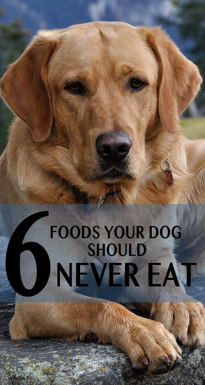 6 foods to avoid giving your puppy or dog