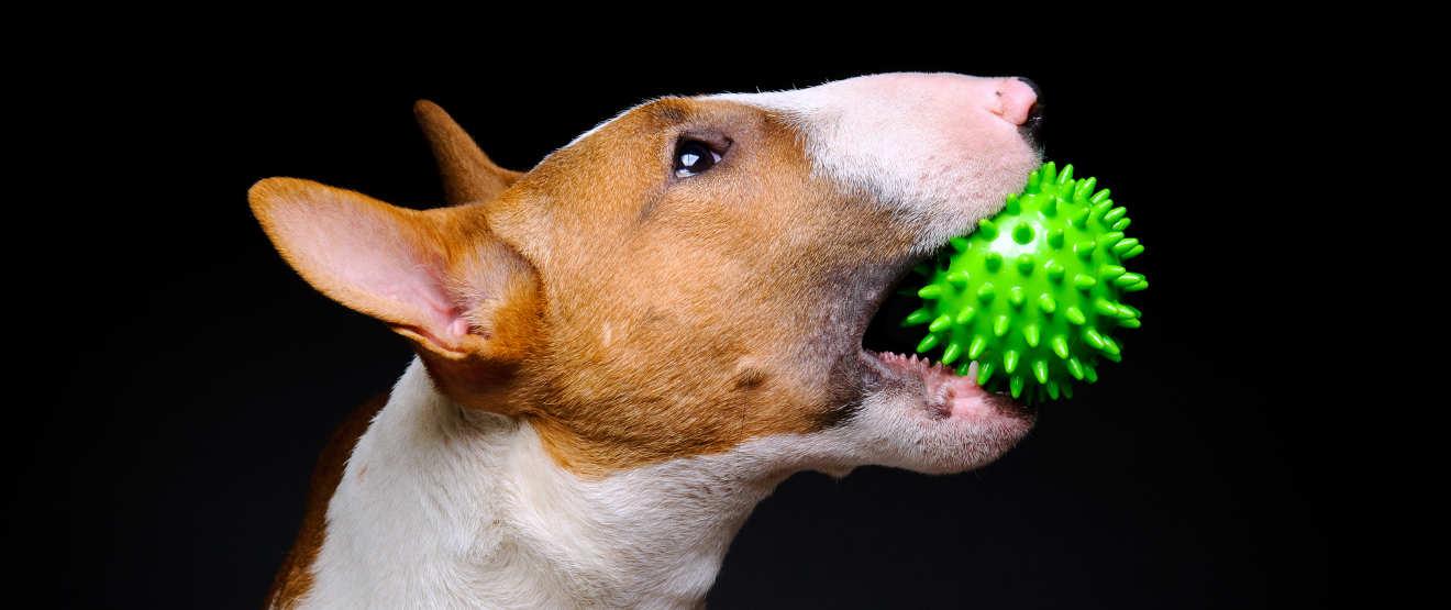 Bull Terrier toy