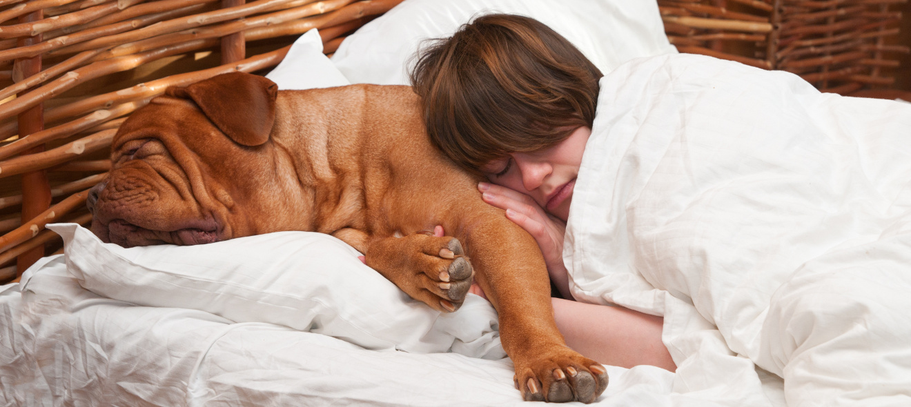 Dogue and girl in bed