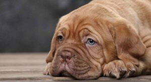 How to Cope with Puppy Diarrhea