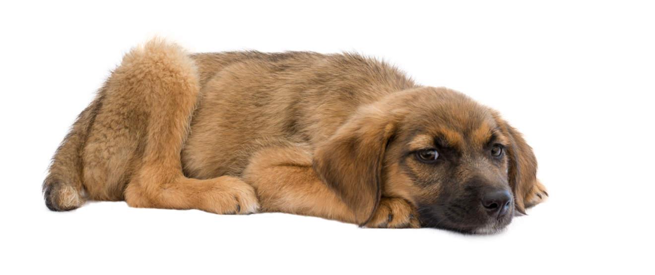 puppydiarrhea