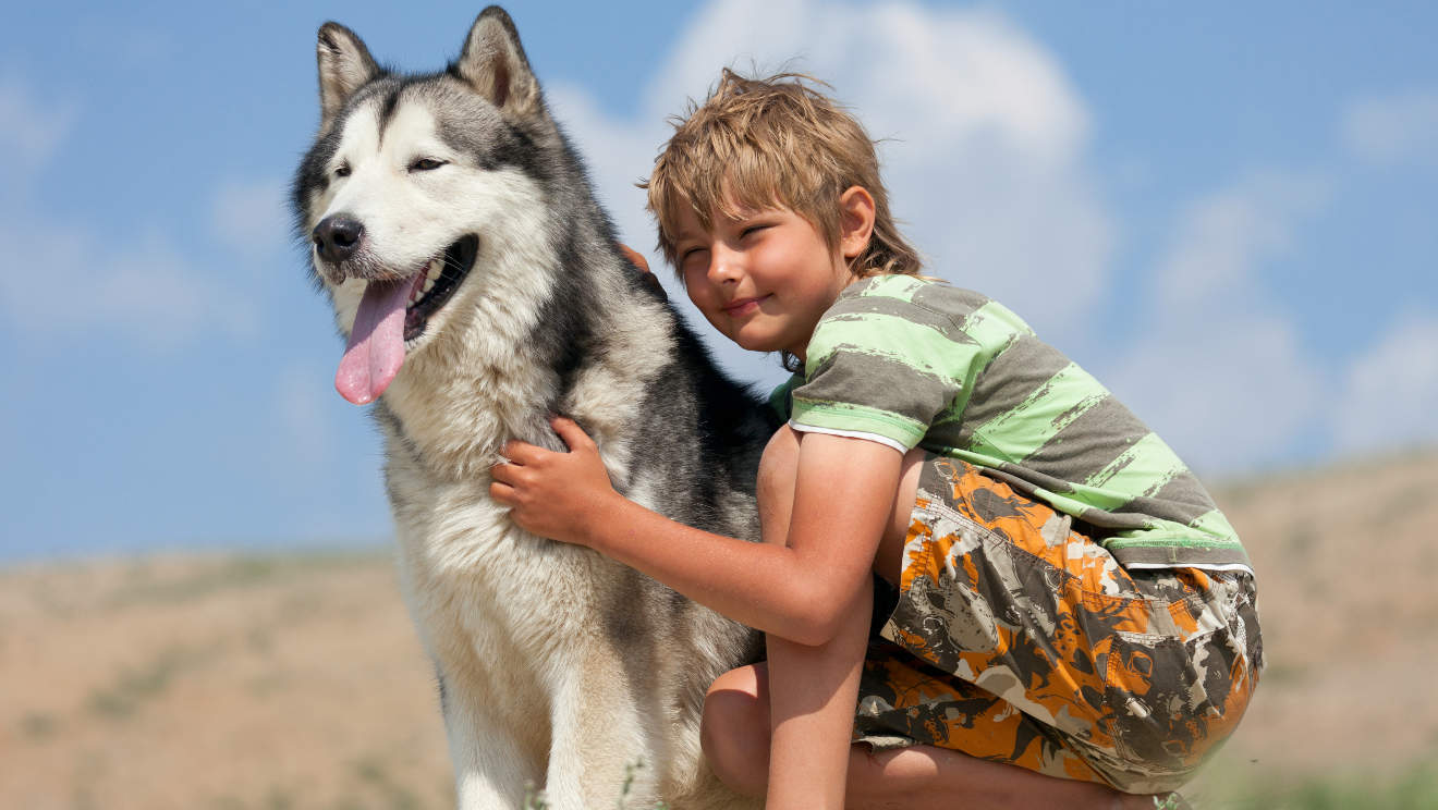 Boy hugging a fluffy dog. Husky dog breed