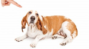 Dog Punishments