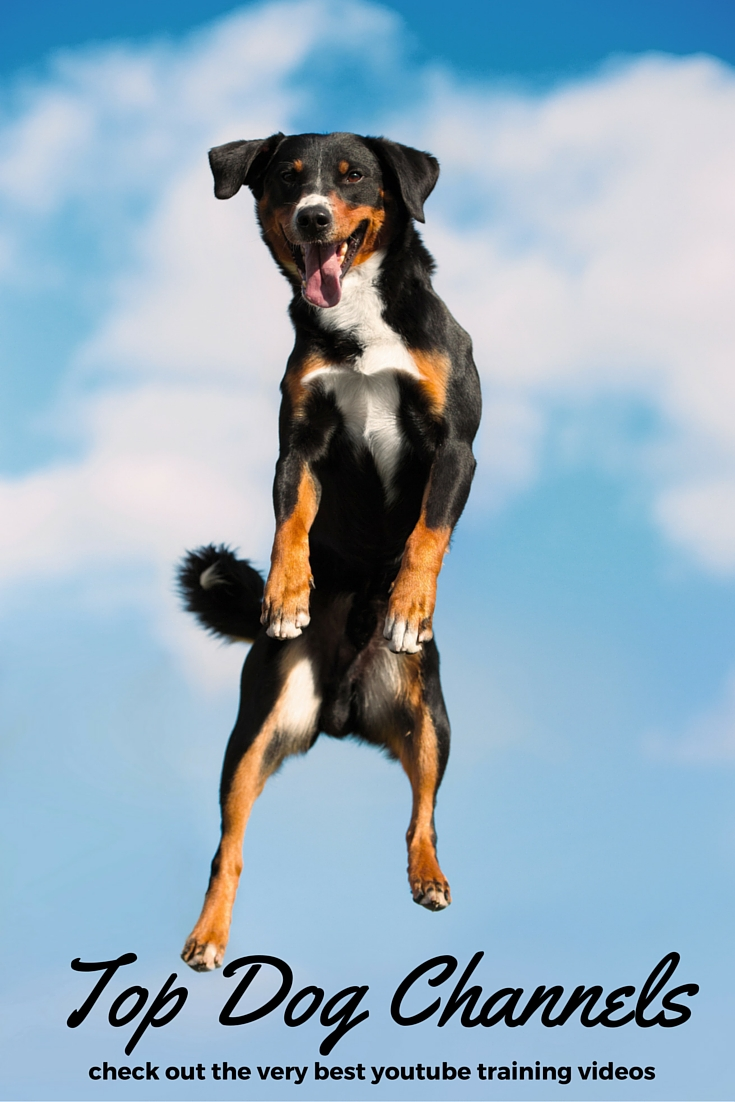 10 top dog training youtube channels the happy puppy site With best dog training sites