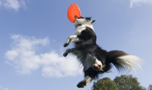 10 Top Dog Training Youtube Channels