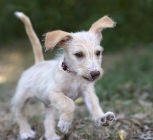 puppy-growth