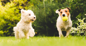 7 Ways to Improve Your Dog's Behavior in a Week