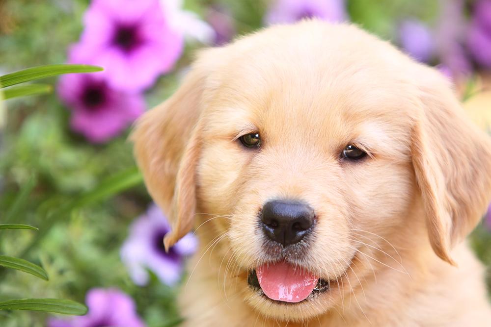 adopt-rescue-buy