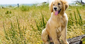 Modern Dog Training Methods and Techniques