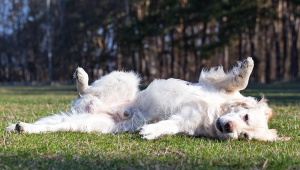 Disobedient Dog: What To Do When Your Dog Won't Obey You