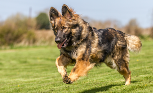 Reinforcement in Dog Training