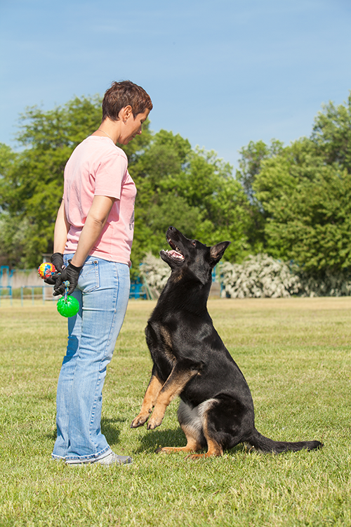 positive-reinforcement-training-for-dogs