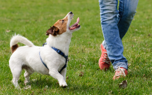 Sending Your Dog Away For Training – Puppy School Pros and Cons