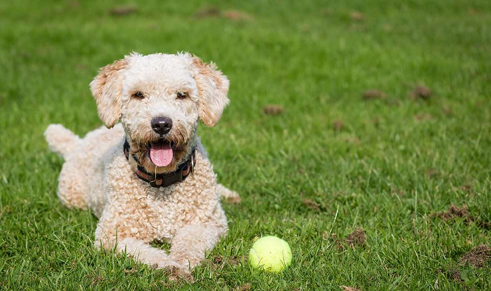 there are benefits to avoiding force in dog training