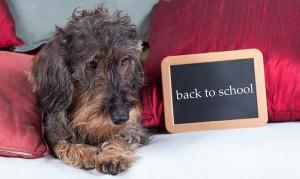 Dog Training With Treats – Is Food Really Necessary?