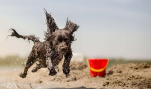 Dog Training: What To Do When Treats Don't Work