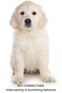 Do pet correctors work and should you use them? Find out here