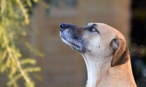 Dog Distraction Training or How to Cure Selective Deafness