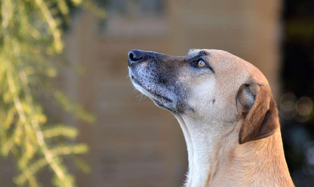 dog distraction training