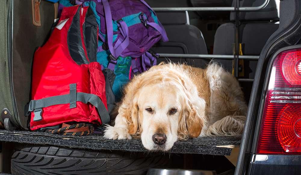 dog-wont-get-in-car