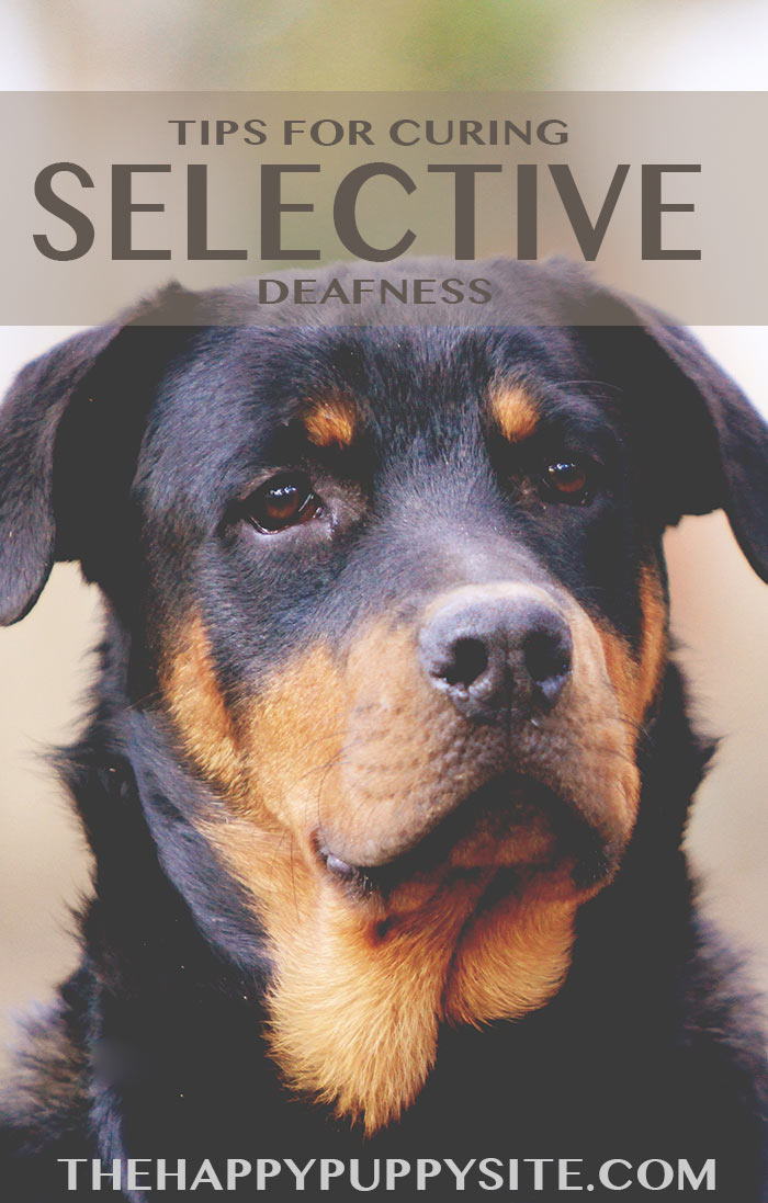 Tips and advice for curing selective deafness in dogs