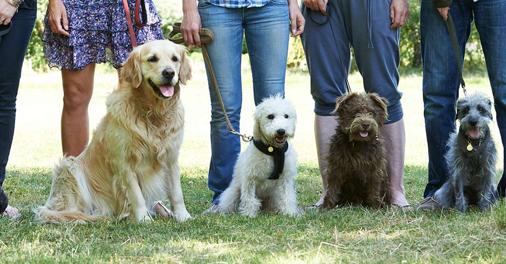 selective deafness in dogs
