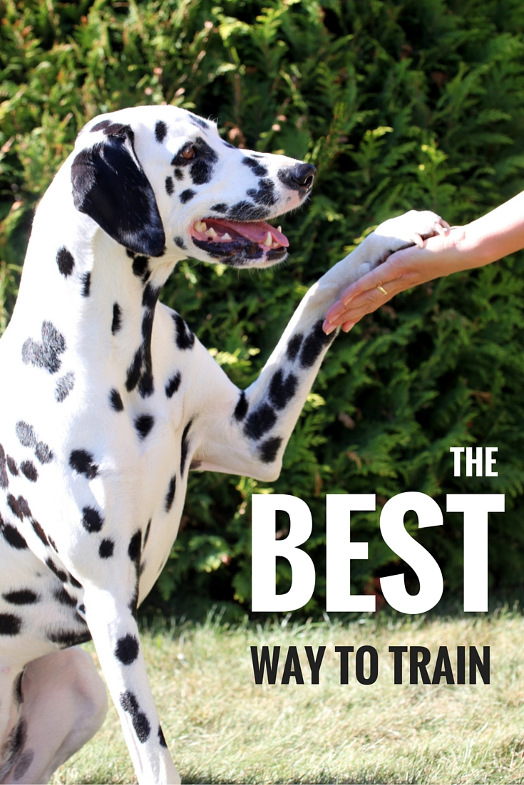 How to choose the best dog training method for your dog or puppy.