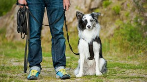 Best Dog Training Methods – Choosing The Right Way to Train Your Puppy