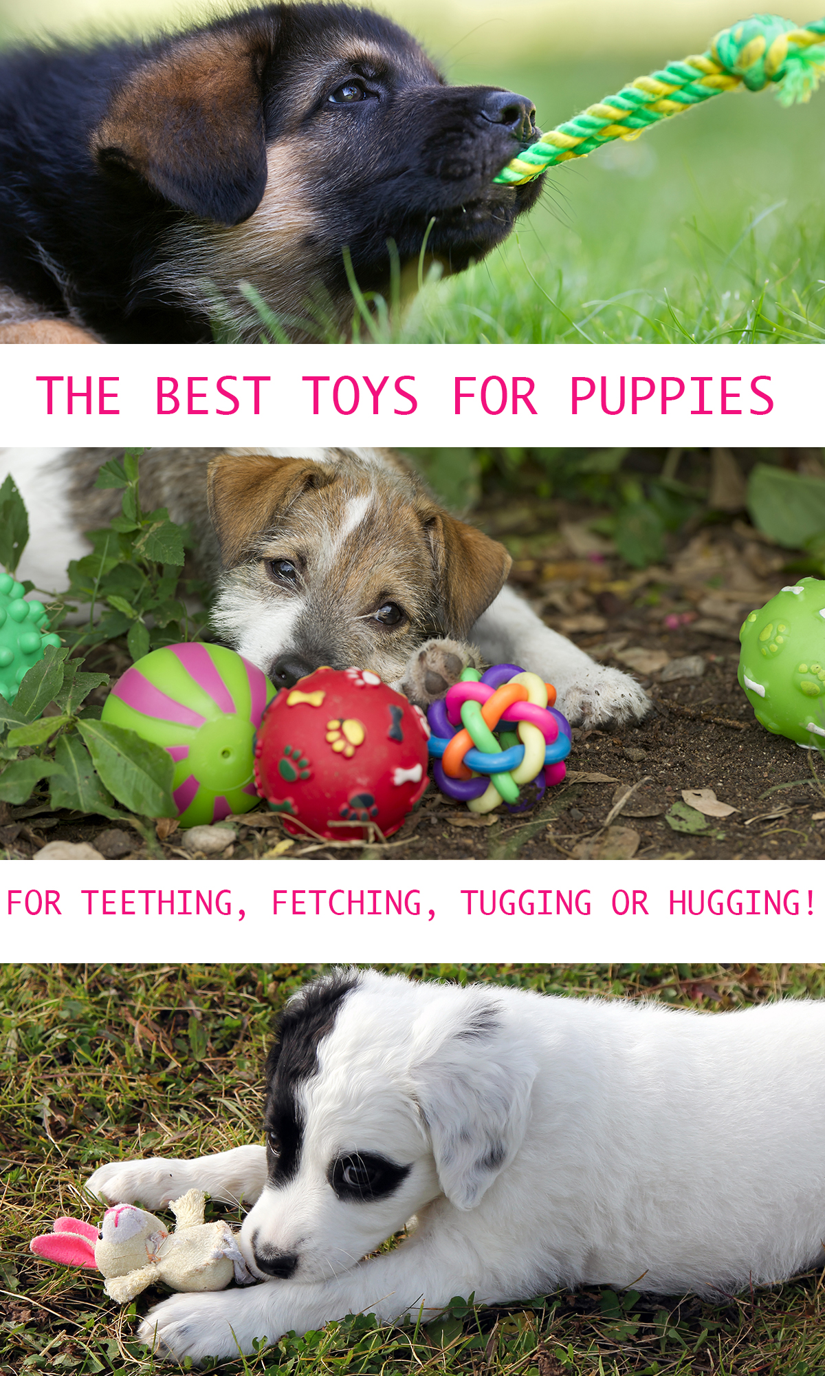 Puppy Toys The Best Dog Toys For Puppies The Happy Puppy Site