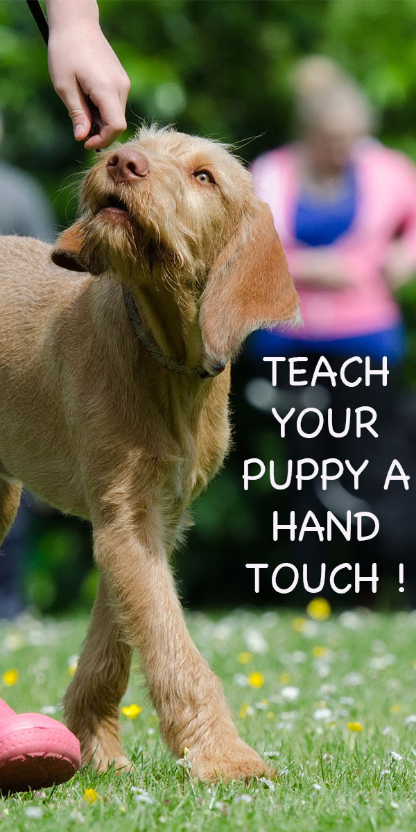 Touch Target Dog Training